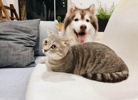Pet persuasion