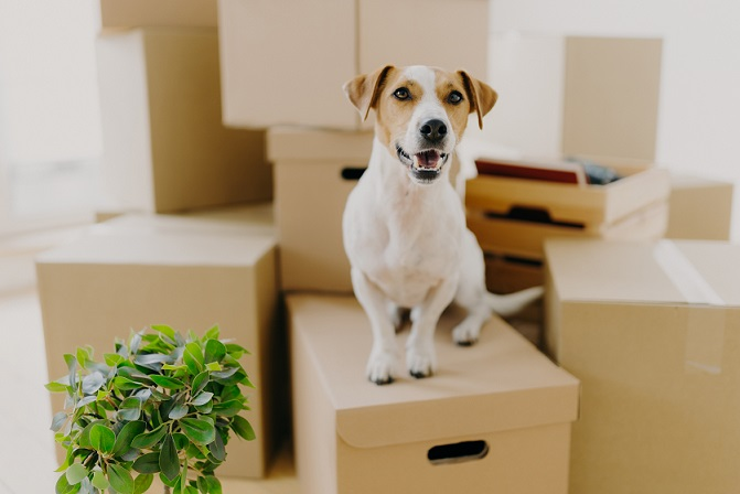 Simplifying your house move