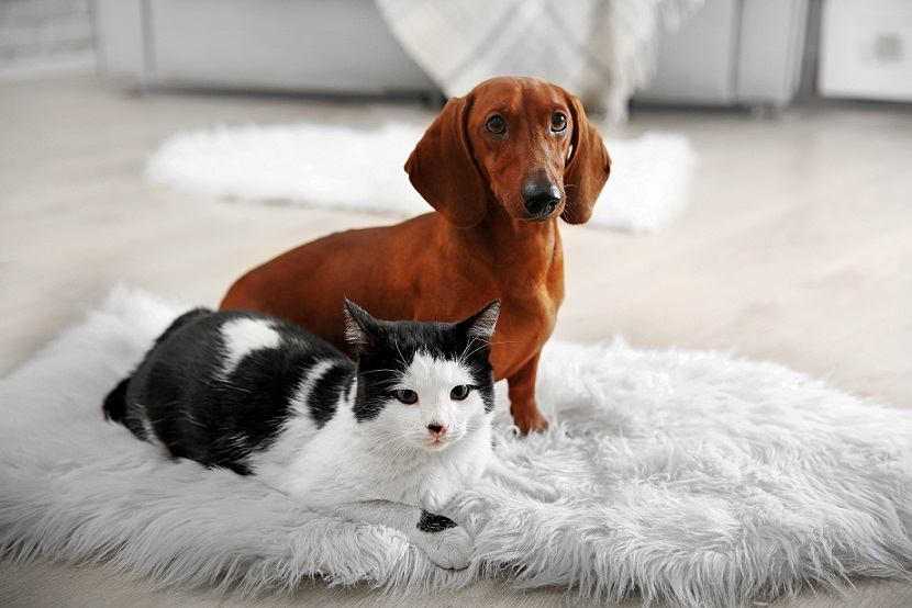 A pet subject don't assume in strata developments